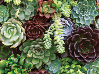 close up of succulent plants